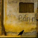 Vietnam Within The Frame 2015 — Sally Harris
