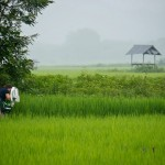 Photographing in a rice paddy • Laos+Angkor Within The Frame 2011 • photo: Victor Allen Rowley